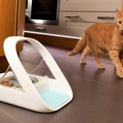 Best Automatic Cat Feeder & Dispenser For Two Or Multiple Cats