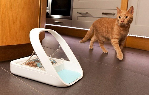 Automatic Cat feeder For Two Or Multiple Cats