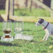 Best Automatic Food Feeder And Water Dispenser For Dogs Reviews