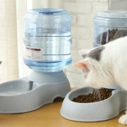 Best 5 Cat Food Feeders And Water Dispensers, Bowls, Dishes