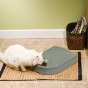 Best Cat Food Dispenser, Feeder, Feeding Station & Bowl Combo