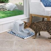 Best Automatic Cat Water Dispenser, Fountain & Bowl Reviews