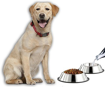 Mlife Stainless Steel Dog Bowl with Rubber Base review
