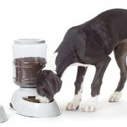 Outdoor Automatic Dog Feeder With Timer & Waterer Dispenser