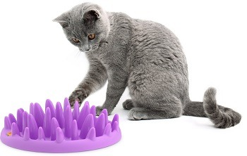 The Company of Animals - Northmate Interactive Cat Feeder review