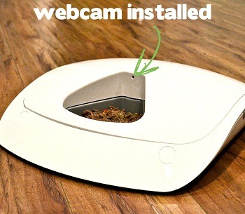 Why do I need an automatic pet feeder