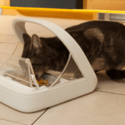 Best 5 Collar Activated (RFID MicroChip) Cat Feeder Reviews