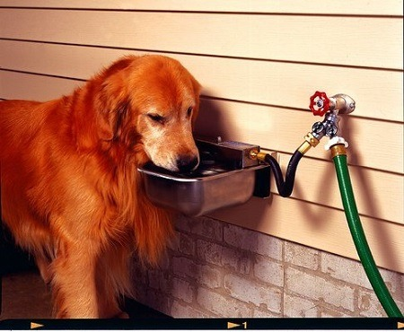 Automatic Watering System For Dogs