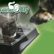 Best Dog Safe (Proof) Cat Food Feeders, Feeding Stations & Bowls