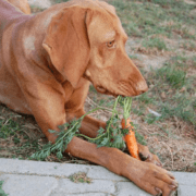Can Your Dog Eat It? Ultimate Guide to Foods Dogs Can and Can't Eat