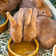 Best Rabbit Water Dishes: Reviews and Buying Guide