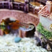 Best Aquarium Sand – Which Options Are Right for Your Tank?