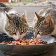 How Long Can You Leave Wet Cat Food Out?